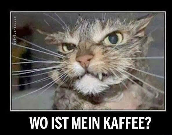 Wp ist mein kaffee? #lustig #tiere