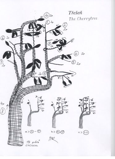 8 stromu - 2 Mb - isamamo - Веб-альбомы Picasa
