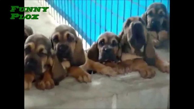 10 Minute of Funny Dogs 2015 -Funny Plox-