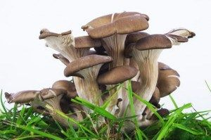Can You Spare 12 Hours a Week? Here's How to Make $600 Growing Oyster Mushrooms for Profit