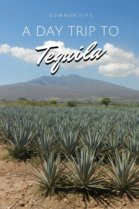 Thinking about going to Tequila? Read what you should do there! #Mexico #Jalisco #Tequila #Agave #DayTrip #Guadalajara:
