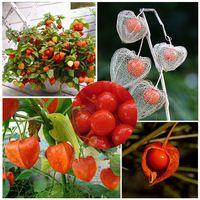 100 единиц / серия бонсай декоративные семена физалис фрукты, китайский фонарик, семена растения сладкий мать грибы