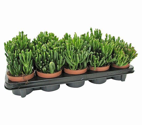 die besten 25 dehner pflanzen ideen auf pinterest rosenpflanzen flowerpower und strau rosen. Black Bedroom Furniture Sets. Home Design Ideas