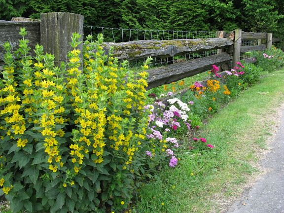 low cost, low upkeep flowerbeds