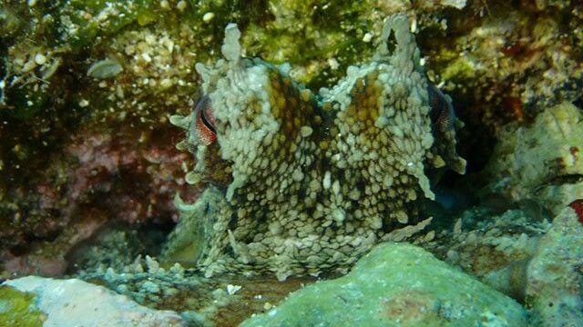Bir çift göz gördüm sanki #scuba #diving #scubadiving #huzur #derinlerde #underwarter #underwaterphotography #ebcousto #Coustodive #egebarakuda