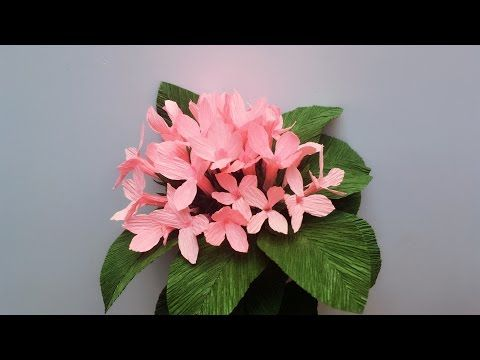 510 best flowers youtube videos images on pinterest paper flowers abc tv how to make bouvardia paper flowers from crepe paper craft tutorial mightylinksfo