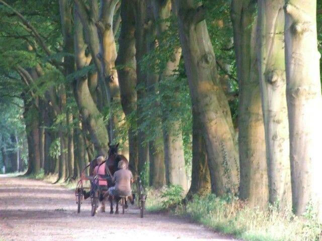 Op de Corverslaan, Hilversum/'s Graveland Foto: Martine