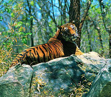 Tropical Rainforest Animals in Africa | Endangered Animals List