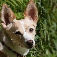 #dogalize Catarro auricolare del cane: tutte le informazioni sulla malattia #dogs #cats #pets
