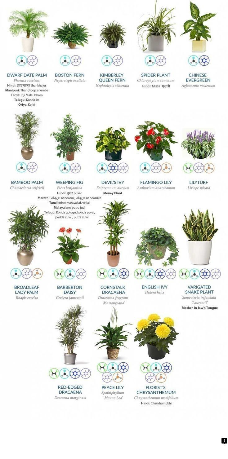 Read Information On Cool Electronics Please Click Here For More Information Enjoy The Website Indoor Air Purifying Plants Air Purifying Plants Plants
