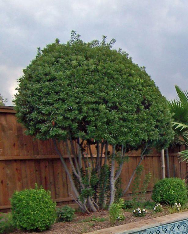 10 best flower garden images on pinterest backyard ideas for Wax landscape