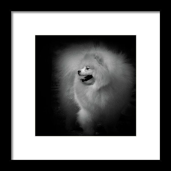 Little Cloud Of Charm Framed Print by Irina Safonova.  All framed prints are professionally printed, framed, assembled, and shipped within 3 - 4 business days and delivered ready-to-hang on your wall. Choose from multiple print sizes and hundreds of frame and mat options.#IrinaSafonova#Works #FineArtPhotography #HomeDecor#IrinaSafonovaFineArtPhotography #ArtForHome #FineArtPrints #HomeDecor #Animal #dog #puppy