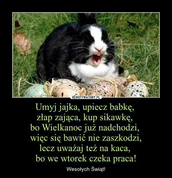 Umyj jajka, upiecz babkę, złap zająca, kup sikawkę, bo Wielkanoc już nadchodzi, więc się bawić nie zaszkodzi, lecz uważaj też na kaca, bo we wtorek czeka praca! – Wesołych Świąt!