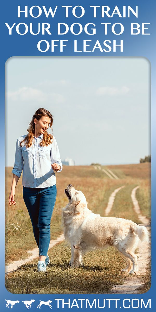 How To Train Your Dog To Be Off Leash Easiest Dogs To Train