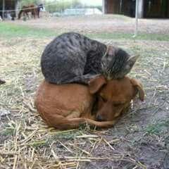 Amizade verdadeira.
