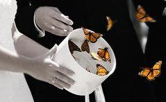Butterfly Release wedding butterfly