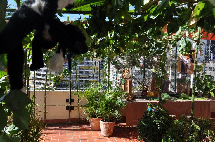 Una entrada muy selvática Enredaderas, lianas monos y bambú....una combinación perfecta!