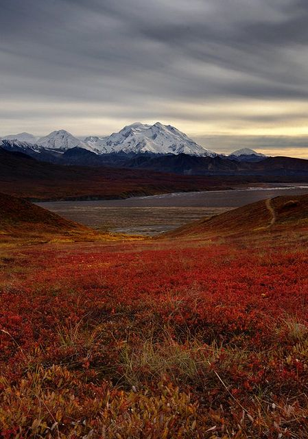 Denali National Park, Alaska. Soon... Can't wait for our cruise in August