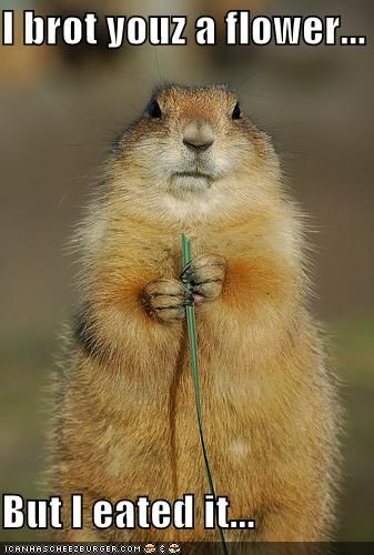 :)Thoughts, Prairie Dogs, Funny Sayings, Quotes, Squirrels, Pets, Funny Animal Photos, So Funny, Flower