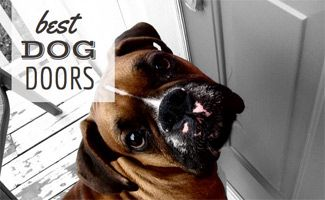 Give yourself and your dogs room to roam free. See our reviews for the best dog doors for your home, from sliding glass and screen doors to wall dog doors.