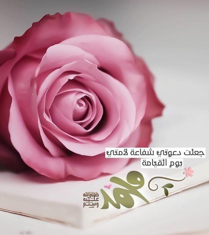 Pin By Muqadas Noor On حبيبي وقدوتي عليه افضل الصلاة والسلام Rose True Love Positive Notes