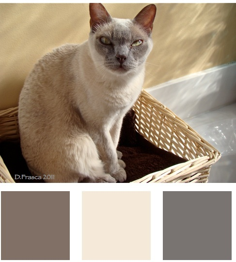 3 Striking Color Combinations For Fall: 15 Must-see Taupe Color Schemes Pins