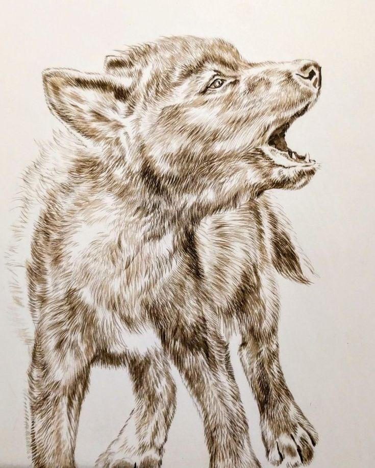 нарезка волчонок рисунки в картинках такого ажиотажа только