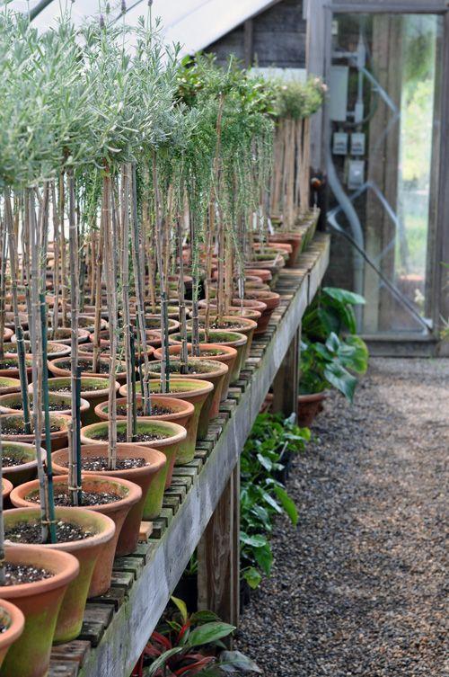 topiary love.