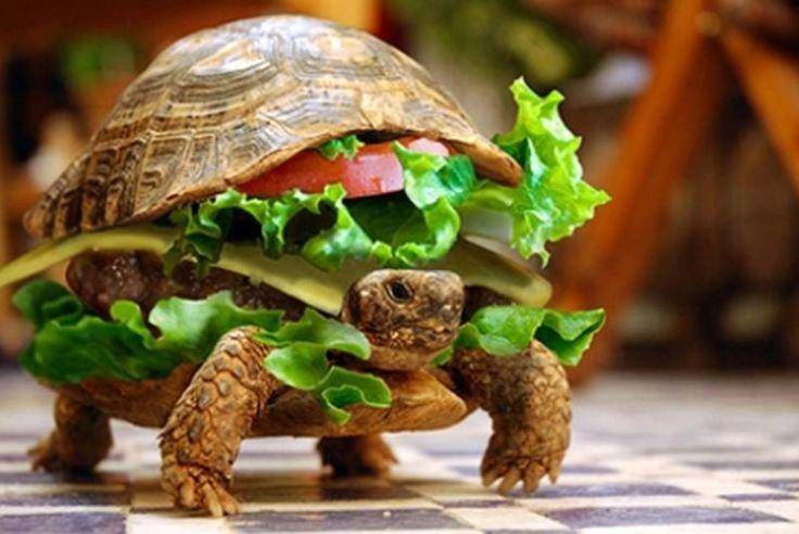 Disfraza a su tortuga de hamburguesa - MundoTKM