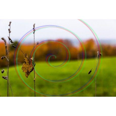 Download PHOTO: Autumn