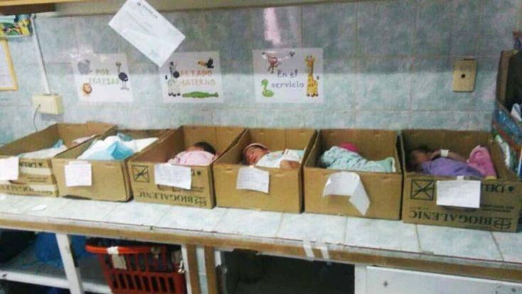 Los recién nacidos en cajas de cartón.