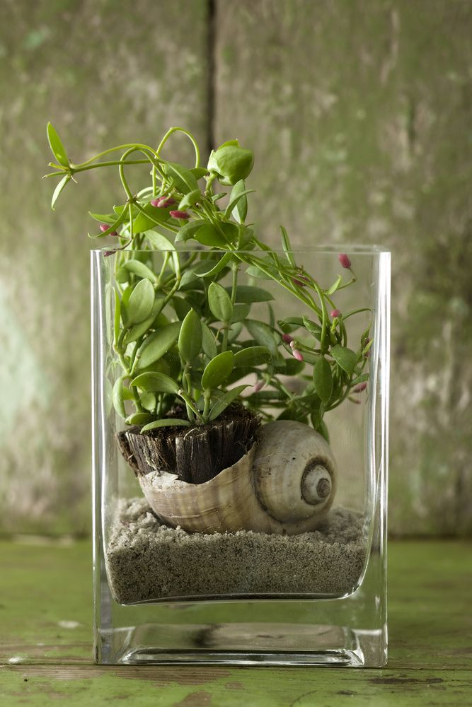 quirky terrarium styling