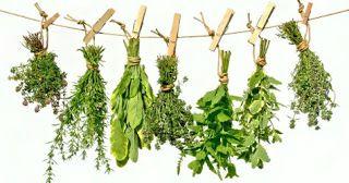 Ajurweda - Indyjska i Tybetańska Medycyna Tradycyjna Zioła Terapie naturalne - Uzdrawianie: Zioła - rośliny lecznicze - skutki uboczne i przeciwwskazania