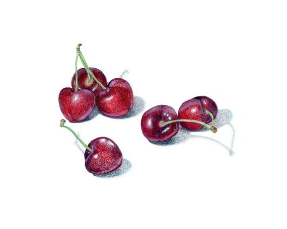 Bing Cherries - Archival print of colored pencil drawing / food art / kitchen art / wall art