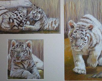Petit tigre blanc de beauval pastel samantha romé