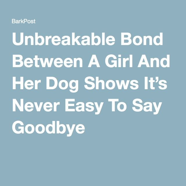 Quotes About A Girl And Her Dog 732 Best Paw Kids Images On Pinterest  Dog Cat Animales And Pets