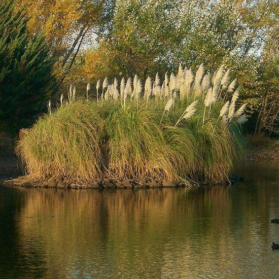 Riddells Creek Lake - Michelle Thompson