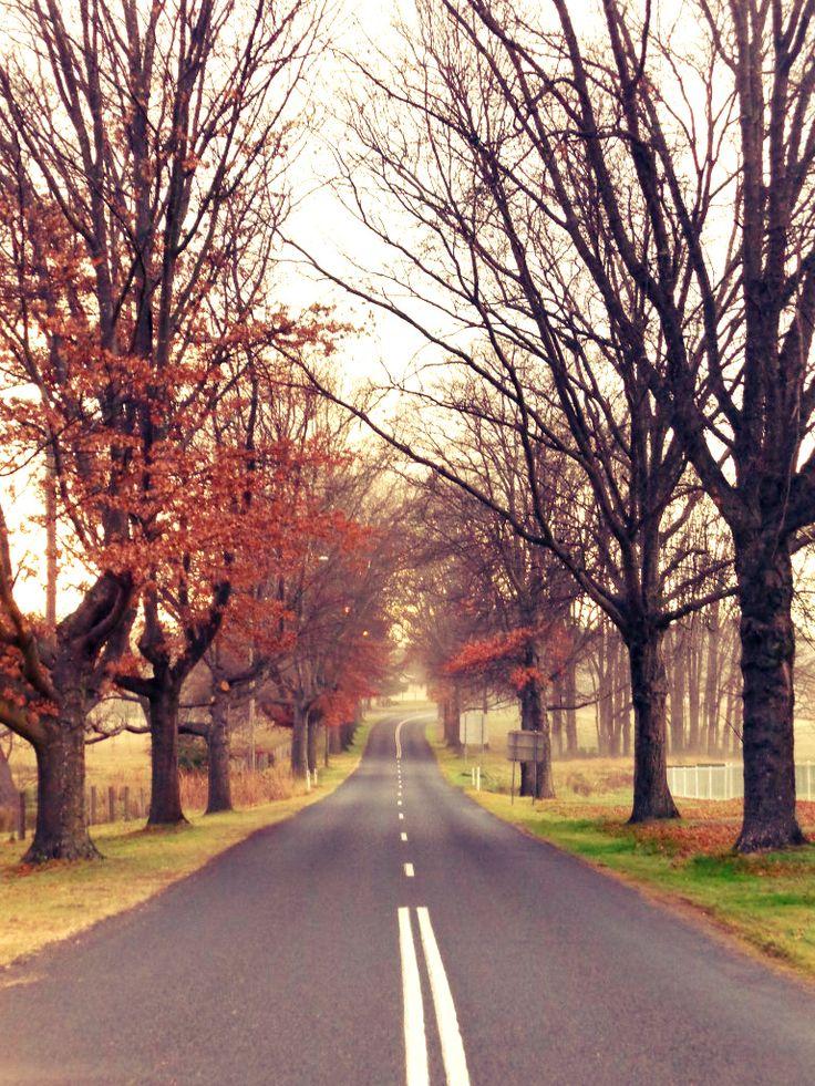 Bruxner Highway, Tenterfied