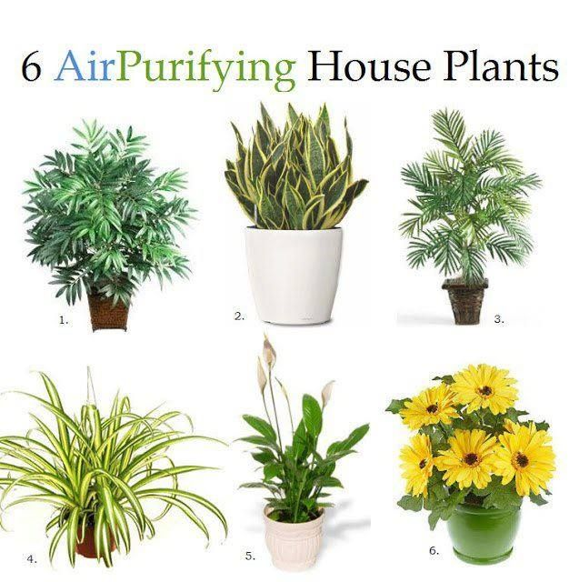 """1. Bamboo Palm: Removes formaldahyde & act as a natural humidifier. 2. Snake Plant: absorb nitrogen oxides & formaldahyde. 3. Areca Palm: best general air cleaner. 4. Spider Plant: remove carbon monoxide, toxins or impurities, best at removing formaldahyde. 5. Peace Lily: the """"clean-all"""" often placed in bathrooms or laundry rooms, removes mold spores, formaldahyde & trichloroethylene. 6. Gerbera Daisy: remove benzene, improve sleep by absorbing carbon dioxide & giving off more oxygen over…"""