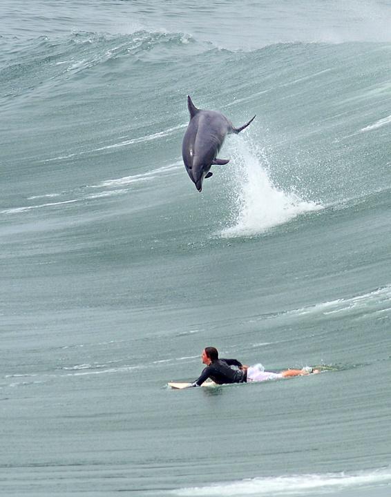 Look a dolphin!