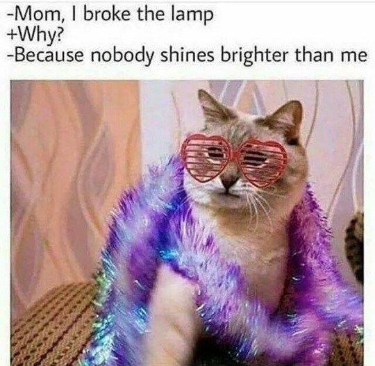 Hilarious Cats Text Posts On Tumblr – 15 Pics