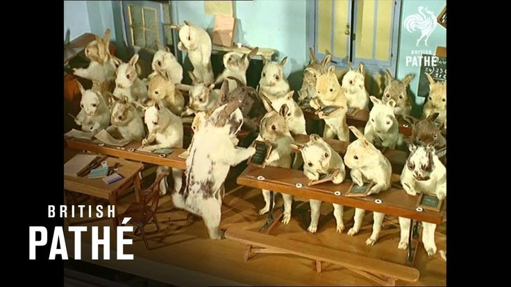 Crazy Taxidermy Museum - Stuffed Animals in Costumes (1965) [HD]