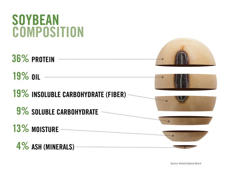 Soybean Composition Infographic | Source - Photo Gallery: Agriculture Infographics | Corn and Soybean Digest