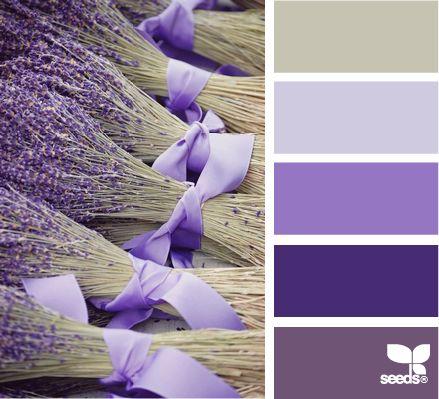 lavender tones - design seedsWedding Bouquets, Colors, Lavender Wedding, Gardens, Baby Breath, Dark Purple, Lavender Bouquets, Bridesmaid Bouquets, Flower