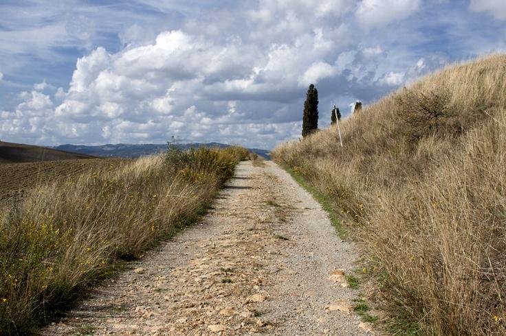 Near Pienza. A peaceful old dirt road: our tour there is outstanding.Trust us! Nelle vicinanze di Pienza una strada bianca piena di pace: le nostre passeggiate guidate sono davvero magnifiche. Credeteci!