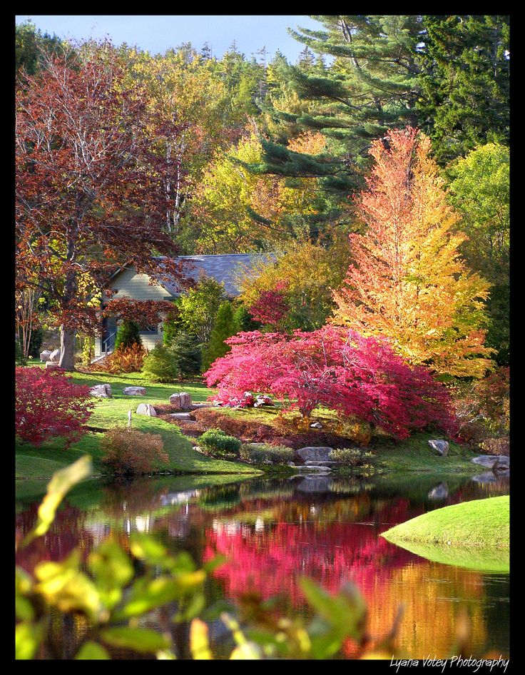 Asticou Gardens, Northeast Harbor, Maine. I had to take a double look. It looked like a painting.