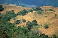 Muchas �reas boscosas transformadas en campos de pastoreo se convierten  en eriales donde el bosque no puede regenerarse por s� mismo.