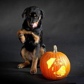 29 best Dog Pumpkins and Halloween images on Pinterest | Pumpkin ...