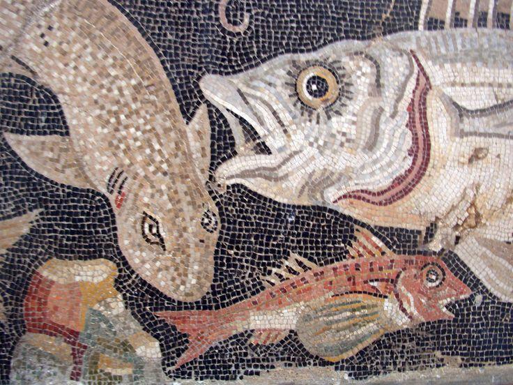 pompeii mosaics fishes                                                                                                                                                                                 Plus