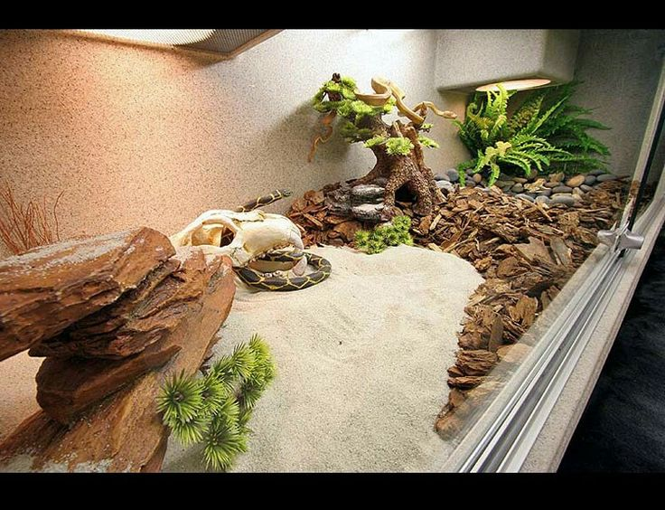 25 Best Reptile Enclosure Ideas On Pinterest Bearded